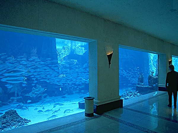 The Dig was an aquarium area with much to look at. So much to see, so ...